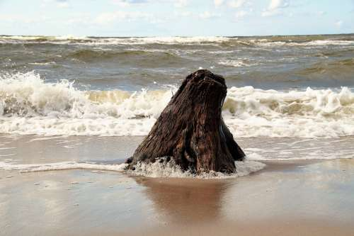 Sea Washed Up Strain Wood Stump Waves Bank Sand