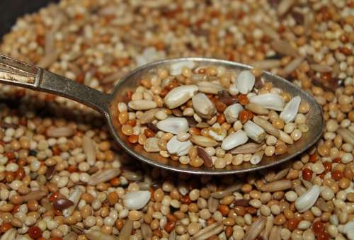 Seeds Portion Spoon Sunflower Seeds Grain Mixture