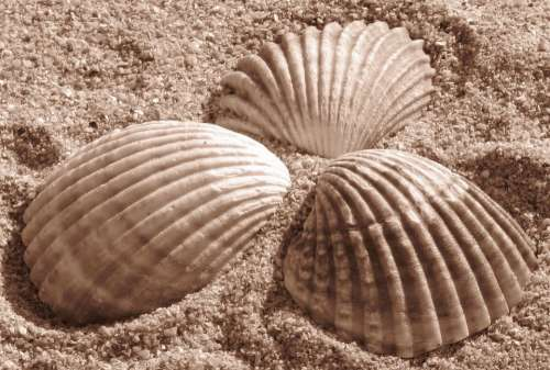 Shells Sand Beach