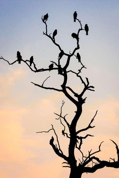 Silhouette Tree Spring Bird Nature Sky Blue