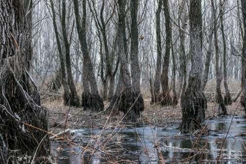 Silviucinema Lamultianifoto Weekendtravel Forest