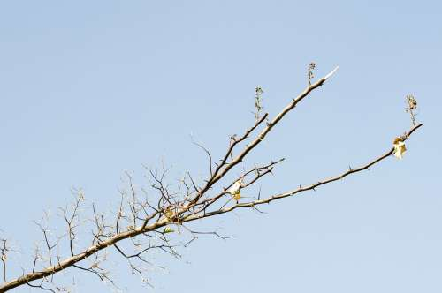 Sky Branch Nature Tree Spring Wood Growing Blue