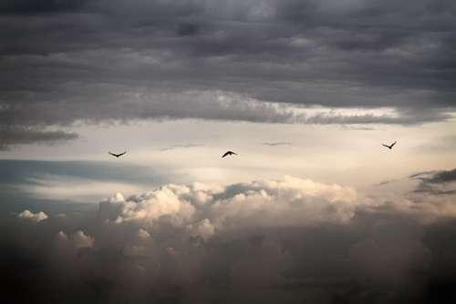 Sky Bird Clouds