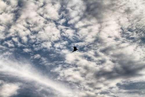 Sky Bird Cloud Flying