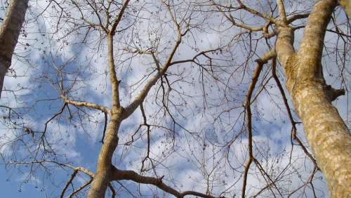 Sky Trees Clouds Nature Branching Out