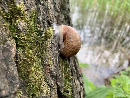 Snail Lake Poland Warmia