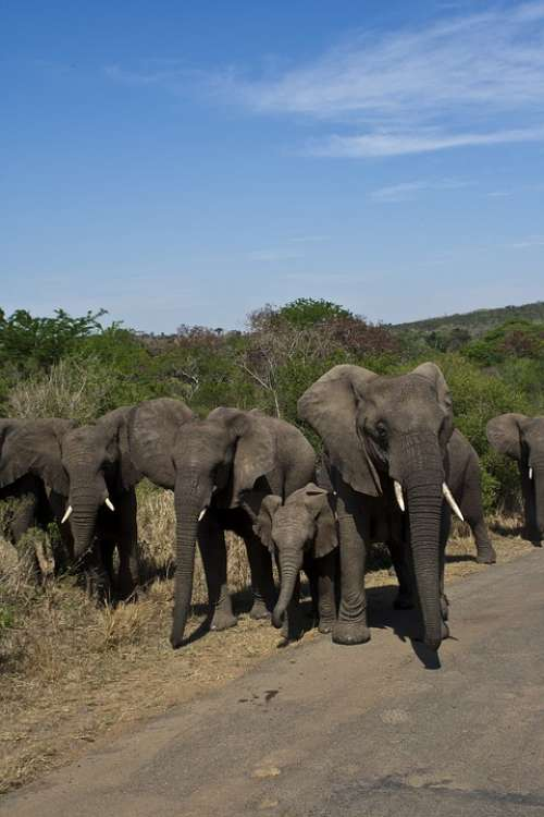 South Africa National Park Elephant Wilderness