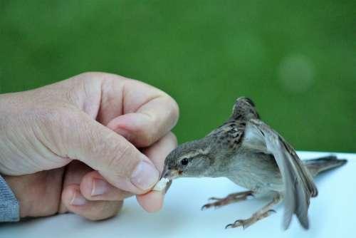 Sparrow Trustful Feed Autumn Cute Cheeky Animal