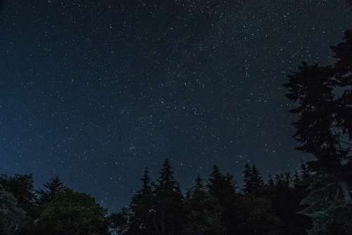 Stars Forest Night Dark Sky Nature Trees