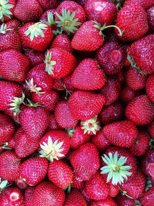 Strawberries Fruit Harvest Crops Nature