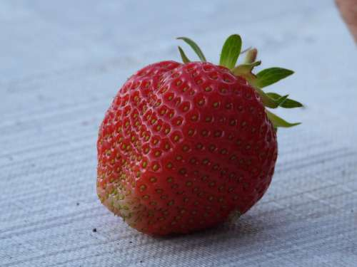 Strawberry Fruit Red Mature Strawberries Food