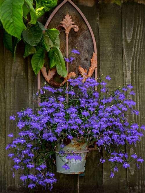 Summer Evening Garden Flowers Pot Arch Gothic