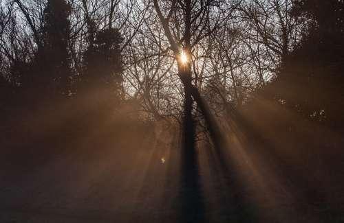 Sunrays Sun Through Mist Sun Through Branches