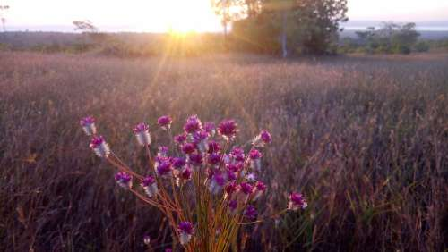 Sunset Flower Afternoon Meadow
