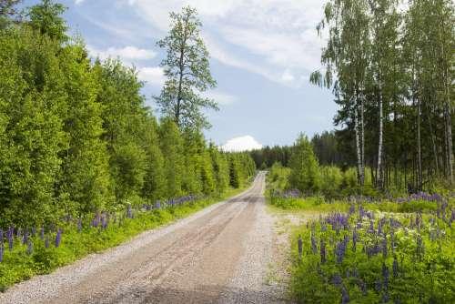 Sweden Nature Landscape Scenic Summer Forest
