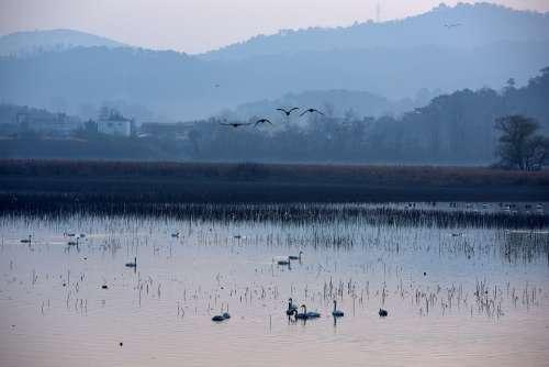 The Main South Reservoir Migratory Birds Changwon