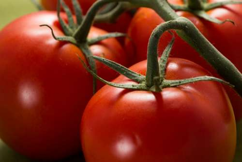 Tomatoes Red Food Fresh Vegetables Healthy