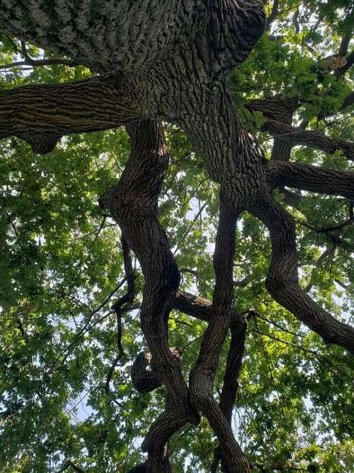 Tree Nature Green Wood Trunk