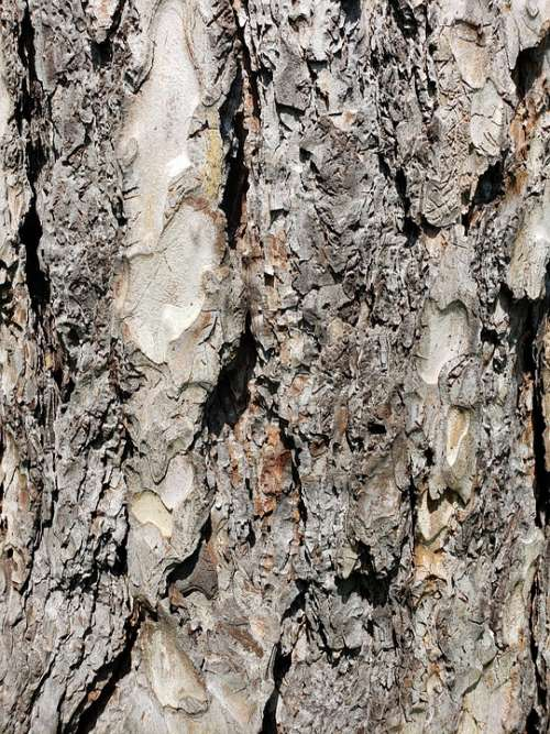 Tree Bark Rough Texture Nature Forest Wood Trunk