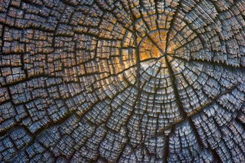 Trunk Stump Wood Baita Mountain Strains Old