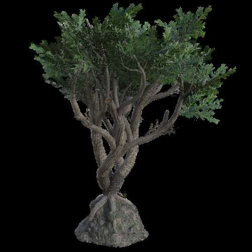 Twisted Tree Branches Leaves Trunk 3D Render