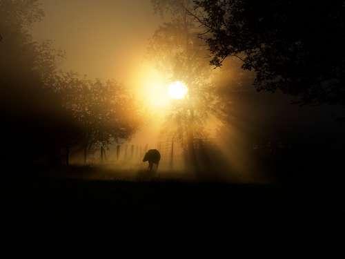 Usa Cow America Landscape Sunrise Nature Morning