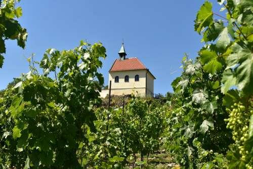 Vineyard The Village City Wine Nature The Winery