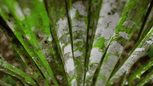 Weathered Bamboo Nature Plant Green