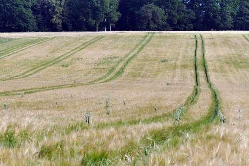 Wheat Field Field Wheat Arable Cereals Cornfield