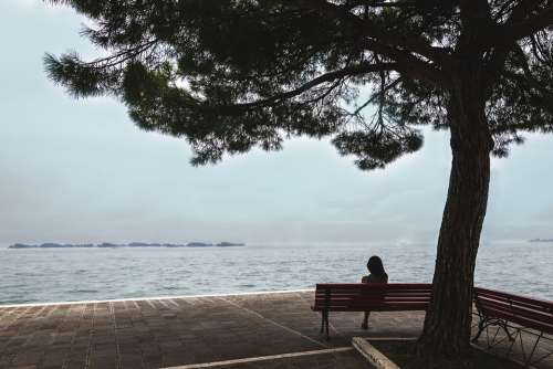 Woman Tree View Sea Silent Mood Person Nature