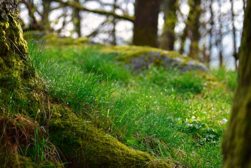 Woodland Forest Floor Forest Moss Nature Seasonal