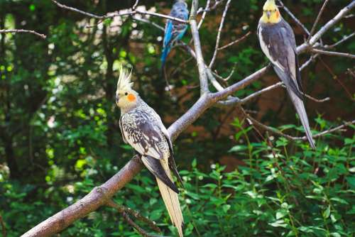 Zoo Birds Animals Creature Nature Trees Colorful