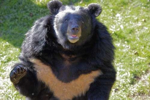 Zoo Nature Bear Animal Mammal Predator Fur