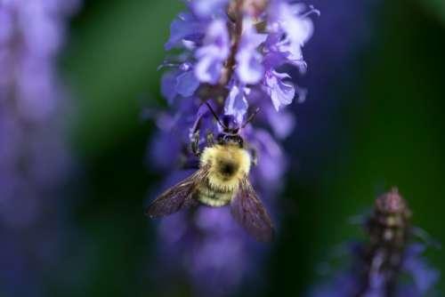 bee flower macro purple flowers