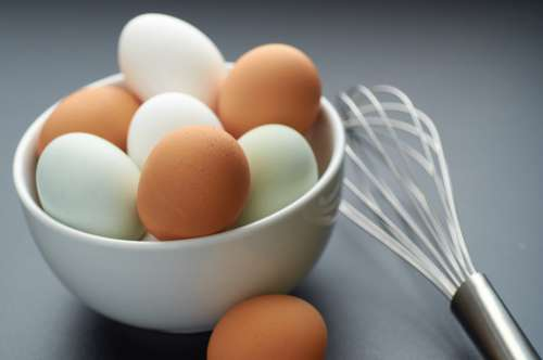farm fresh eggs chicken shell