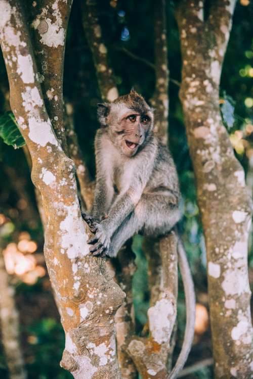 A Baby Monkey Sits On Branches And Smiles Photo