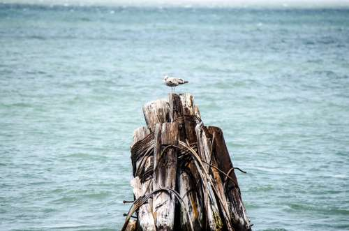 A Bird On A Stack Of Wood In The Sea Photo