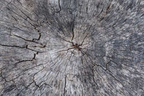 A Cross Section Of A Cracked Ancient Tree Photo