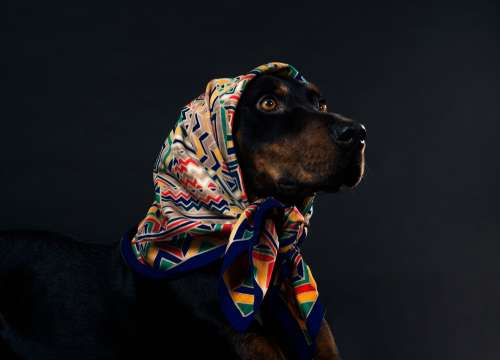 A Dog Looks Up From Under A Head Scarf With Soft Eyes Photo