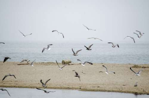 A Flock Of Seagulls Fly Over A Beach To The Sea Photo