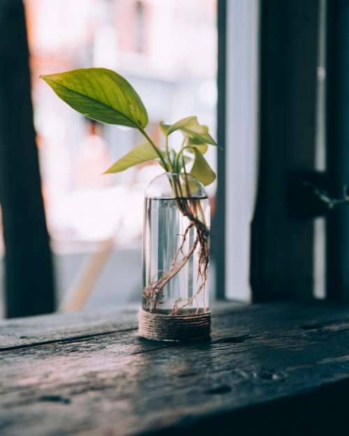 A Plant In A Water Jar By A Window Photo