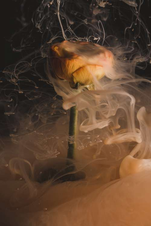 An Orange Flower Smokes As If On Fire Photo