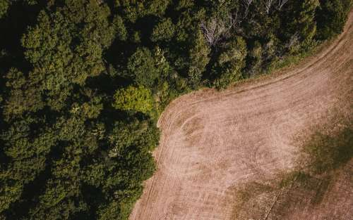 Farm Tracks By The Forest Photo