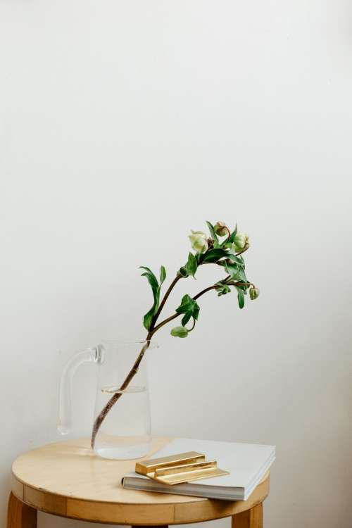 Flower Buds On A Branch Sit In A Jug Of Water Photo