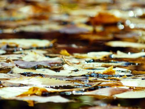 Leaves Floating On Water Photo