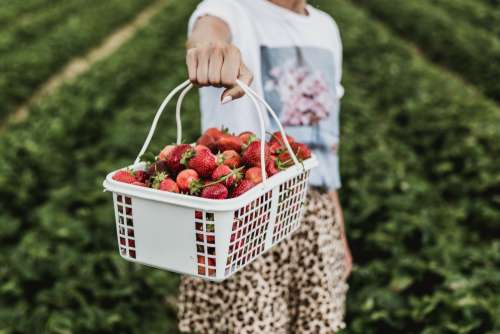 Look At My Strawberries Photo
