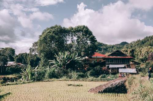 Lush Trees Tower Over A Modest Home Along Rice Paddy Photo