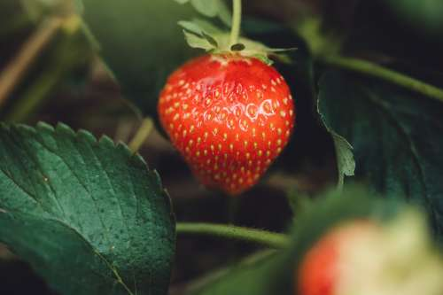 Seeds On A Strawberry Photo