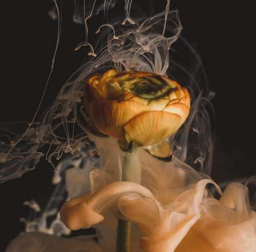 Smoky Waves Emanate From An Orange Flower Photo