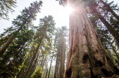 Sunlit Forest Photo